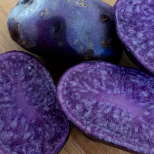 Russian Blue Gourmet Seed Potatoes - Keon Garden Centre - Moose Jaw