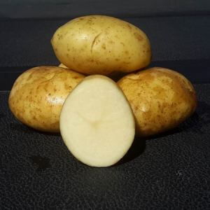 Kennebec Seed Potatoes Bulk - Moose Jaw - Keon Garden Centre