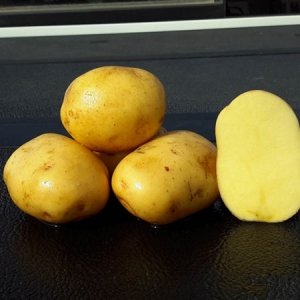 Yukon Gold Seed Potatoes Bulk - Moose Jaw - Keon Garden Centre
